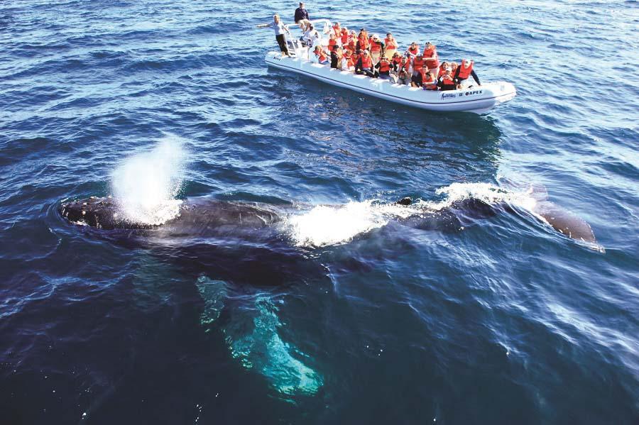 Avistameinto de ballenas