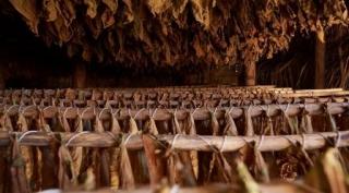 Ron, Cacao y Puros: Los tres sabores dominicanos que seducen al mundo