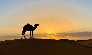 Visitando el Sahara de Marruecos